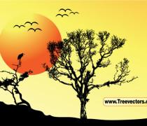 Sunset background tree
