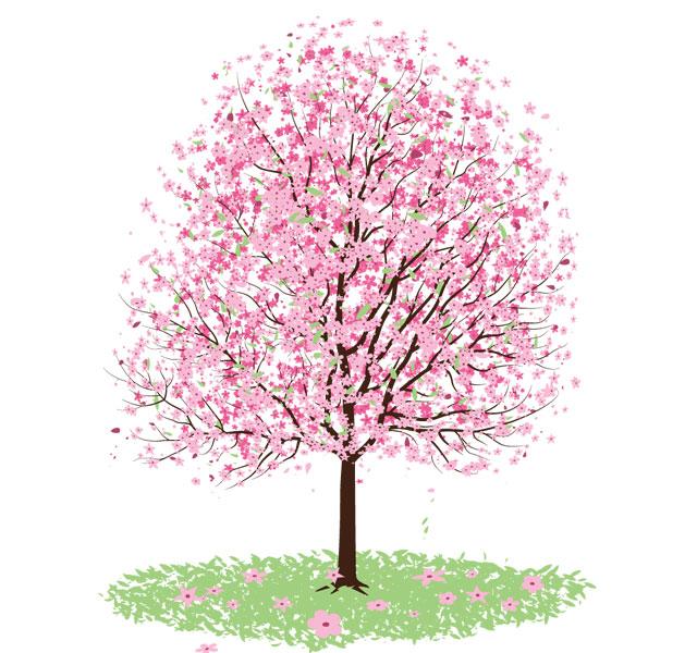 Pink Cherry Blossom Tree Vector Tree Vector
