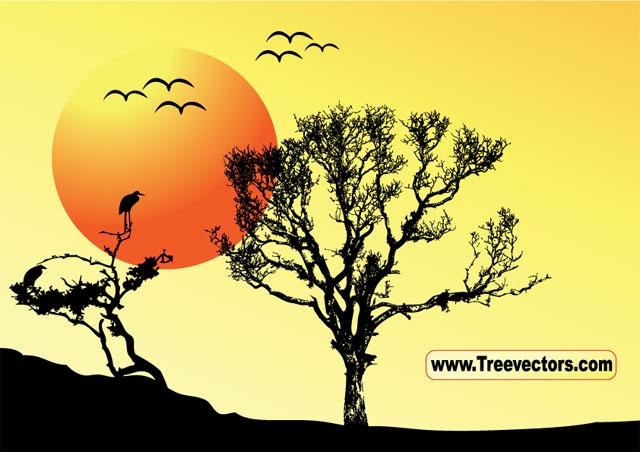 Sunset background tree Tree Vector